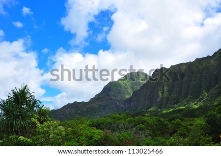 Rain forest against cloudy bright blue sky - stock photo
