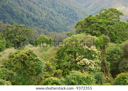 rain forest canopy, New South Wales, Australia - stock photo