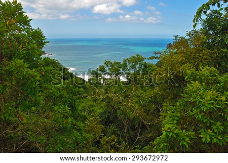 Rain forest in Brazil   forest  - stock photo