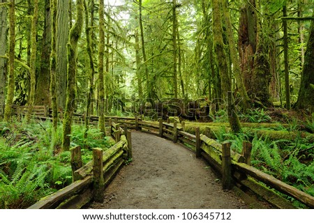 rain forest in macmillan provincial park in vancouver island, british columbia, canada