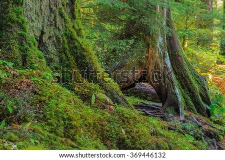 Rain Forest in Oregon