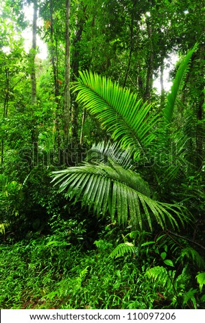 Rain forest in thailand - stock photo