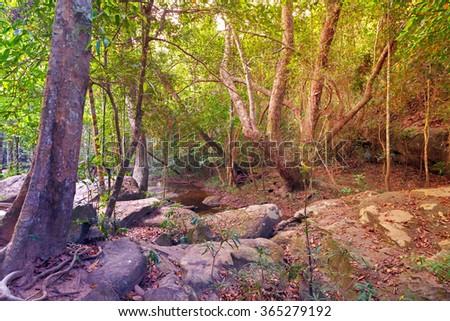 Rain Forest jungle, Phnom Kulen National Park in Cambodia kampuchea. - stock photo