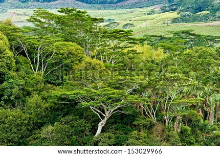 rain forest, leaves roof, tree crowns Mauritius - stock photo