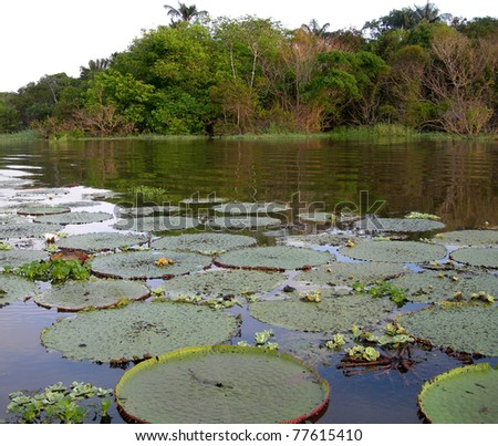 Rain Forest mirrored in a lagoon with water lily pads, on Rio Negro in the Amazon River basin, Brazil, South America - stock photo