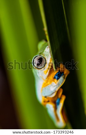 Rain forest, natural environment, exotic frog