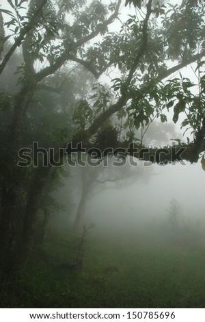 Rain forest  Serra Geral National Park, mountain range in southern Brazil - stock photo