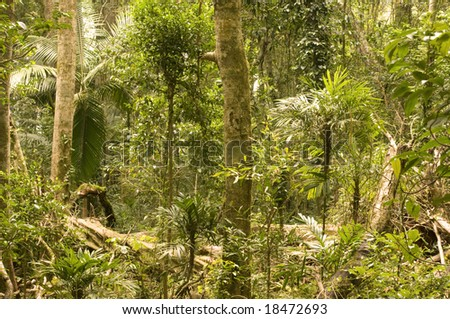 rain-forest window - stock photo