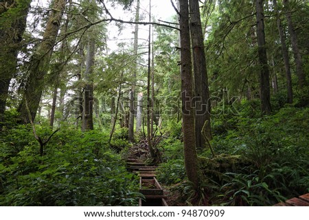 Rain forest with a green underbrush on the ocean fog background. National park. British Columbia
