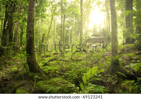 rain forest with fogs and misty lights early in the morning - stock photo