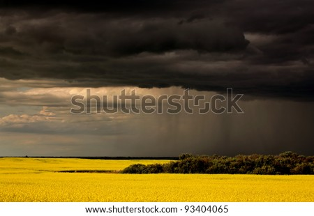 Rain front approaching Saskatchewan canola crop - stock photo