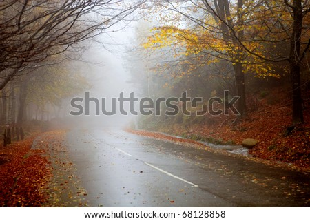 rain in the forest at the portuguese national park - stock photo