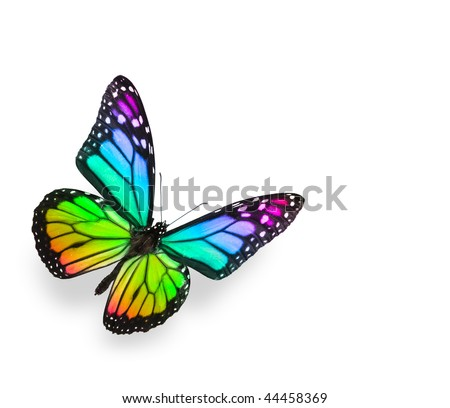 Rainbow Butterfly Isolated on White - stock photo