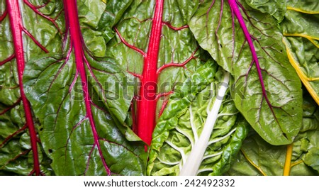 Rainbow Chard Washed and Ready to Prep for Cooking  - stock photo