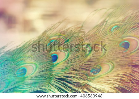 Rainbow effect filter over peacock tail with room for copy/background - stock photo