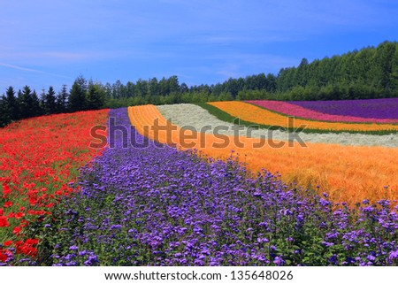 Rainbow Fields of Furano - stock photo