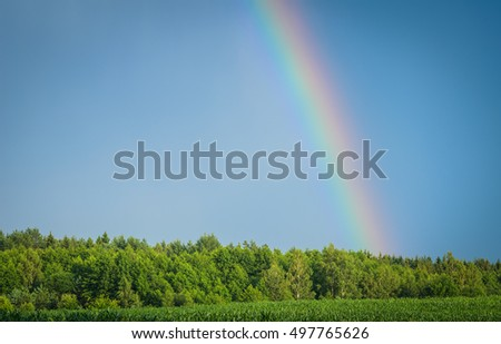 rainbow in the blue sky over the forest