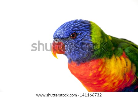 Rainbow Lorikeet, Australian Parrot, isolated on white - stock photo