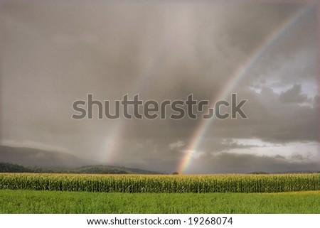 Rainbow over a corn field under a cloudy sky - stock photo