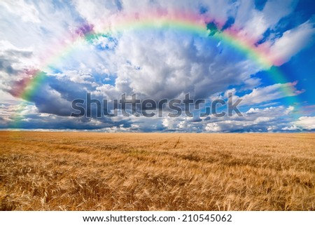 Rainbow over field of wheat ready to be harvested with beautiful cloudy blue sky background - stock photo
