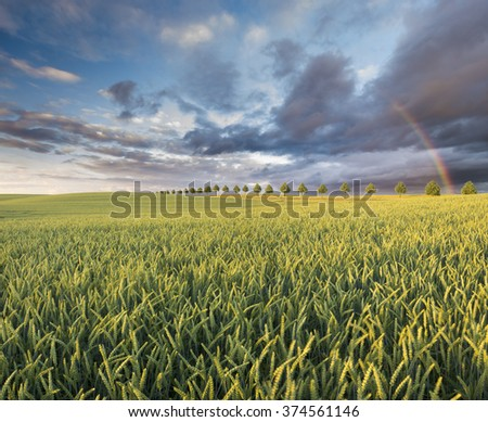 Rainbow over the field after a spring rain storm