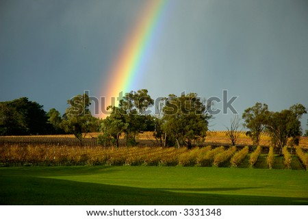 rainbow over vineyard