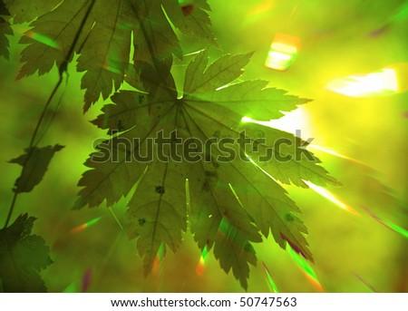 Rainbow rays, green maple leaf - stock photo