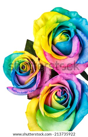 Rainbow roses isolated on a white background - stock photo