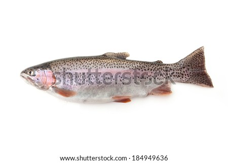 Rainbow Trout Fish isolated on a white studio background. - stock photo
