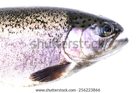 Rainbow trout (Oncorhynchus mykiss) females, isolated on a white background, - stock photo
