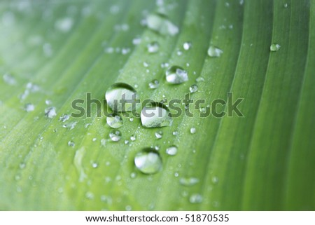 raindrops on a green leaf - stock photo