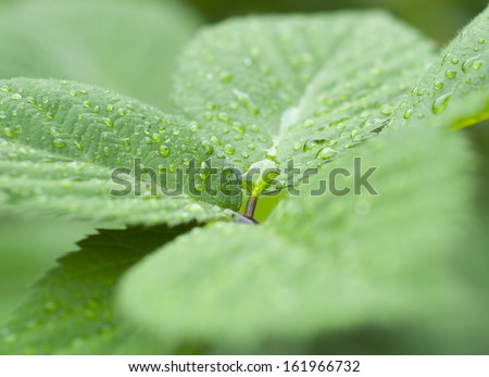 Raindrops on leaves - stock photo