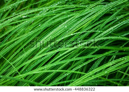 raindrops on the grass - stock photo