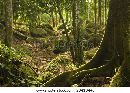 rainforeset - stock photo