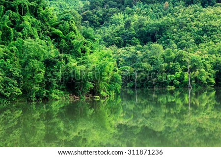Rainforest and river in northern valley, Thailand. - stock photo