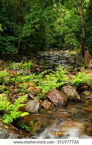 rainforest creek, Daintree area, North Queensland, Australia - stock photo