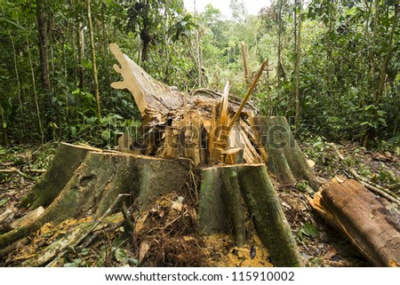 Rainforest destruction in the Ecuadorian Amazon - stock photo