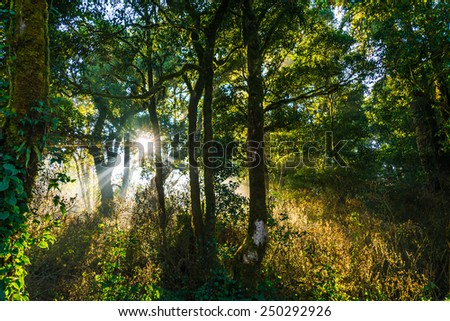 Rainforest Doi Inthanon. - stock photo