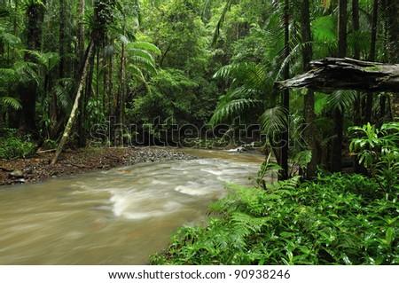 Rainforest during wet season - stock photo