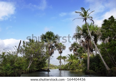 rainforest in Amazon, in  Brazil - stock photo