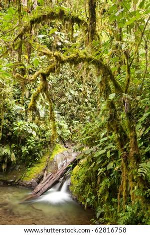 rainforest in Ecuador with intense green tones - stock photo