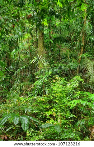 rainforest in North Queensland, Australia - stock photo