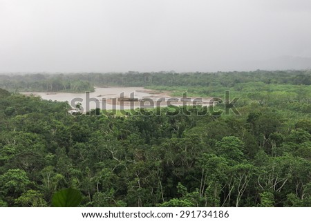 Rainforest. Jungle in the Madidi National Park, Bolivia - stock photo