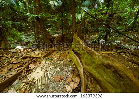 Rainforest landscape. Big plants, lians, roots and palm trees at tropical jungle. Thailand - stock photo
