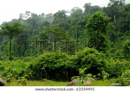Rainforest, national park in Cambodia
