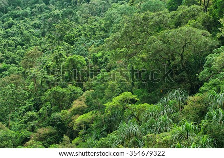 rainforest near Cairns, North Queensland, Australia - stock photo