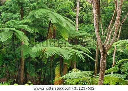 Rainforest near Kuranda, Queensland, Australia - stock photo