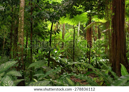 rainforest, Queensland, Australia - stock photo
