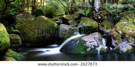 Rainforest river panorama ~ veiled water flows softly over mossy rocks in a lush temperate rainforest.  Taggerty River, Victoria, Australia. - stock photo