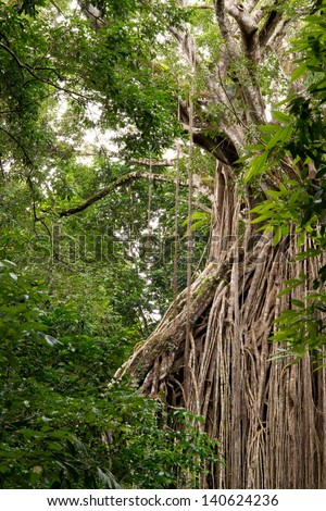 rainforest scenery in North Queensland, Australia - stock photo